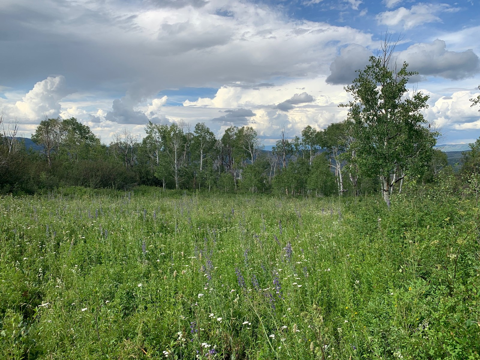 Vacant Land with Access to National Forest For Sale in Colo