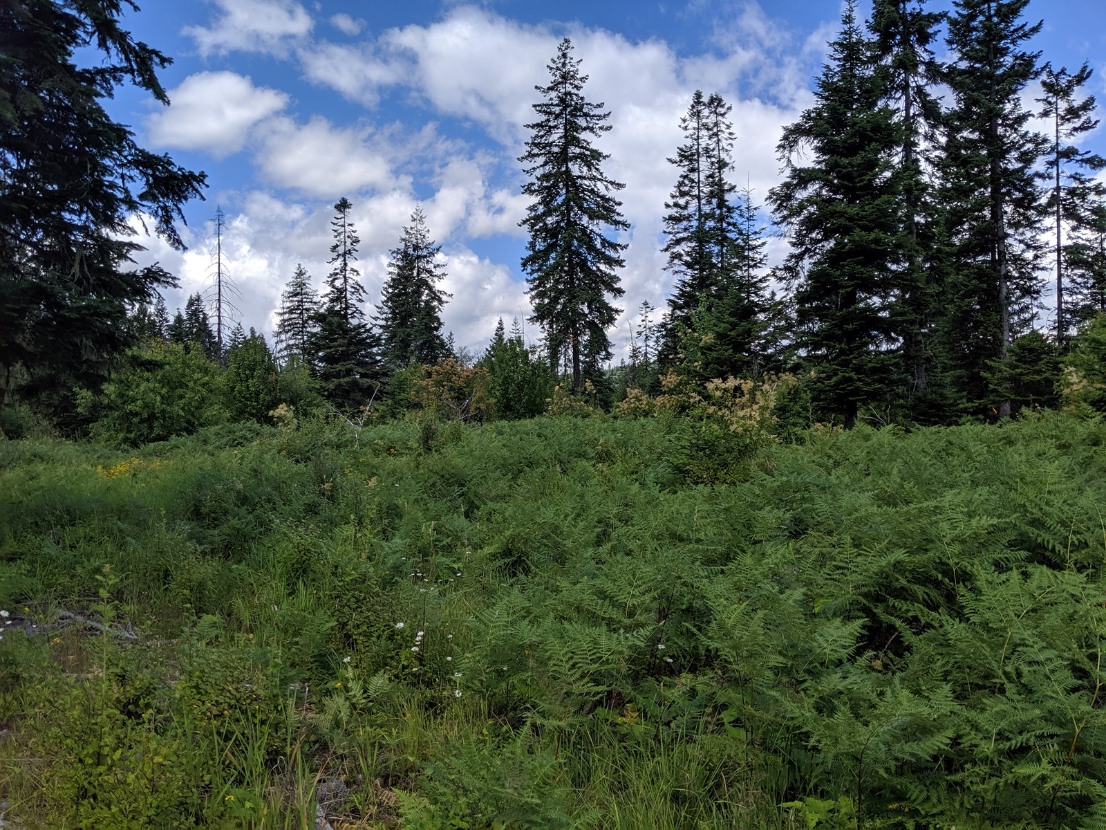 Mountain building/recreational lot for sale Orofino, Idaho
