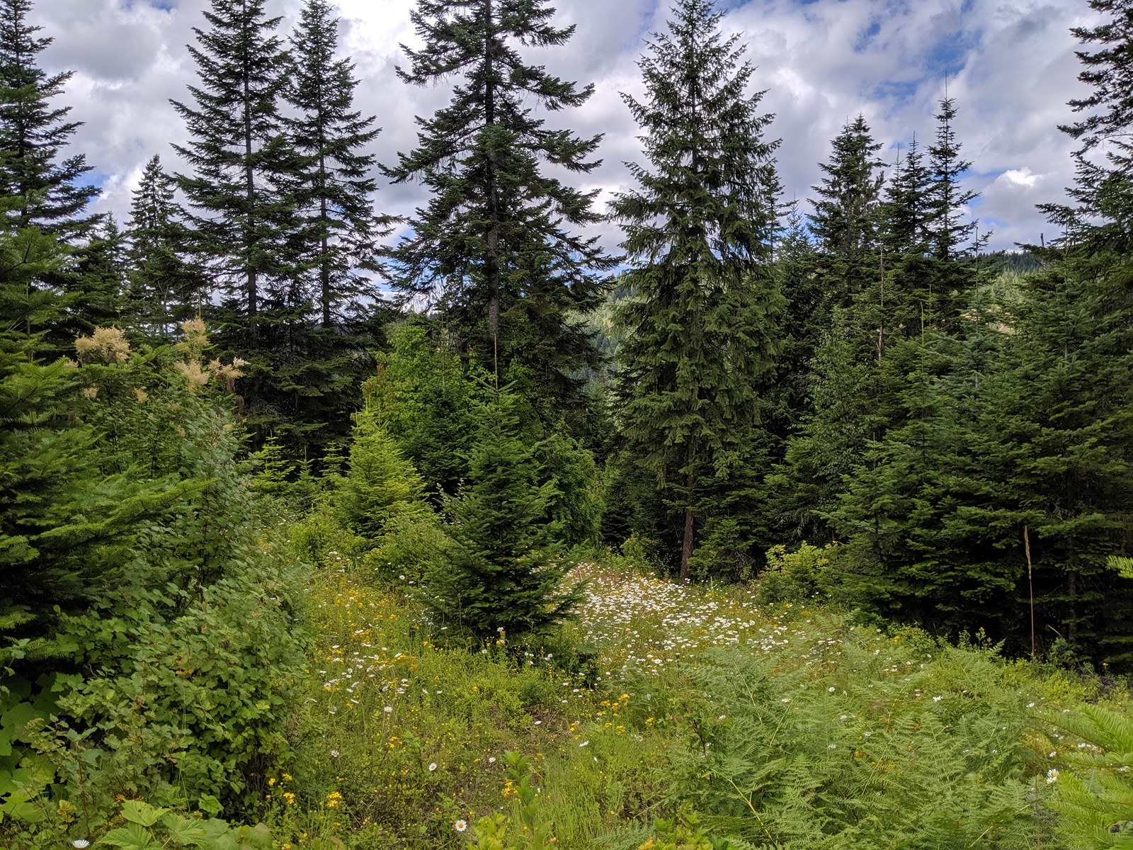 Acreage for sale in Clearwater County, Idaho, Orofino land