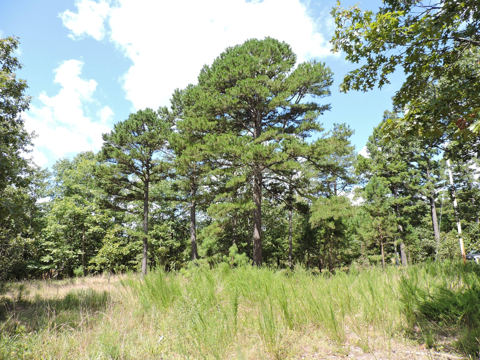 Wooded Timber Land Acreage near Bull Shoals Lake & Harrison