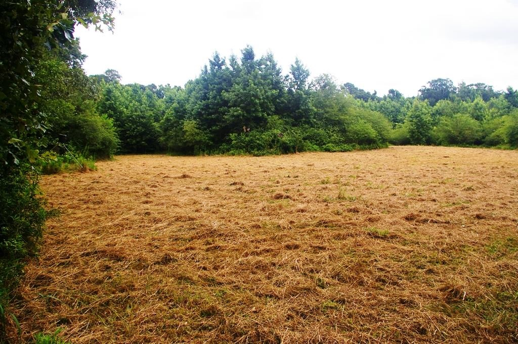 27 Acres Hunting Land for Sale with Pond, Amite County, MS