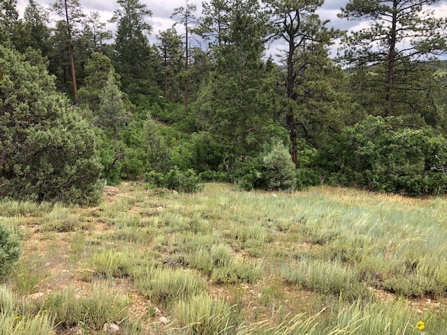 Mountain Meadow Lot with Trees for Sale northern NM Chama