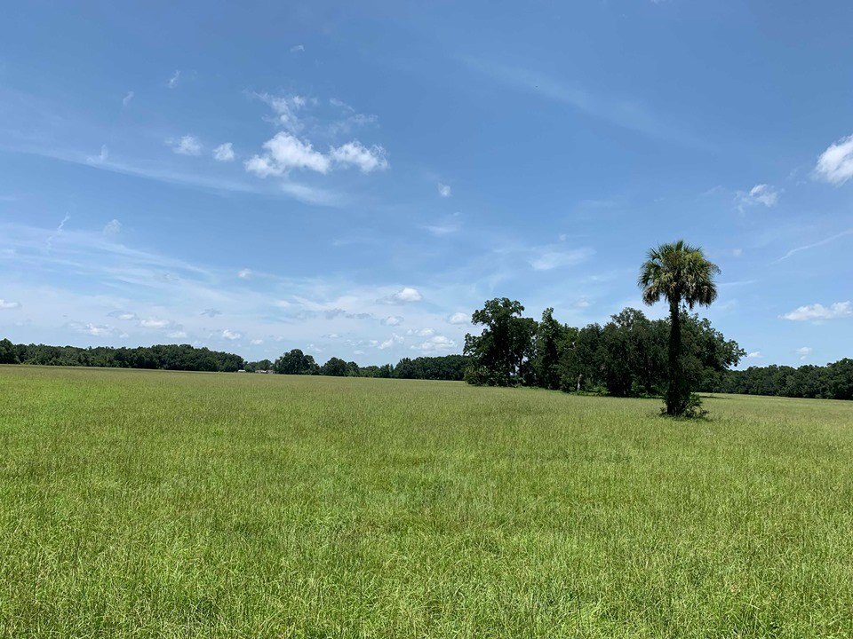 RESIDENTIAL LAND FOR SALE - 86 Acres- Chiefland, Levy Co, FL