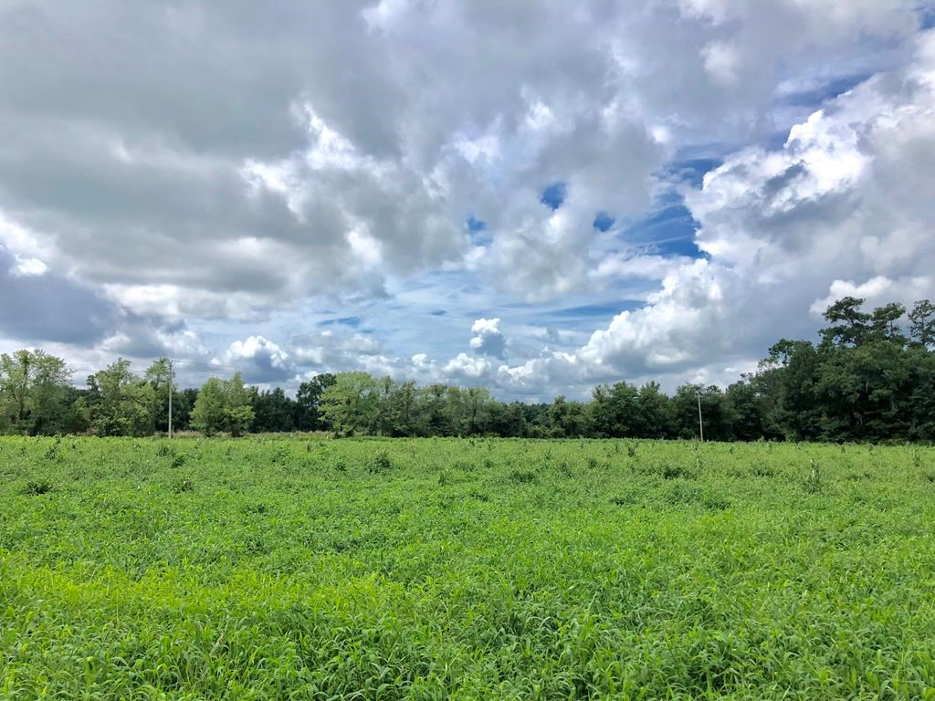 Vacant Land For Sale in Alachua County, Florida