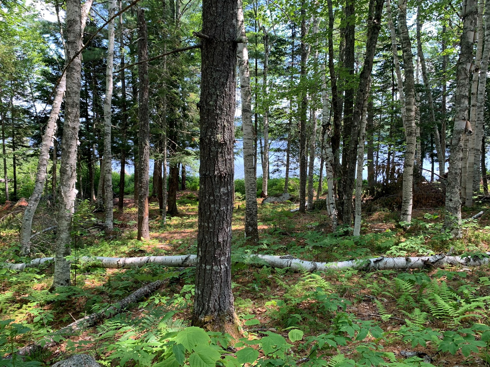 Lakefront Land For Sale in Maine