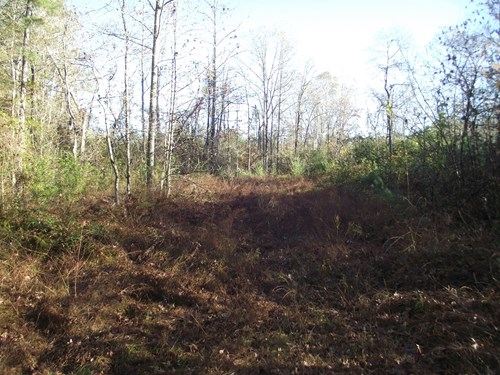 Acreage for sale in TN, Hunting, No restrictions, Investment