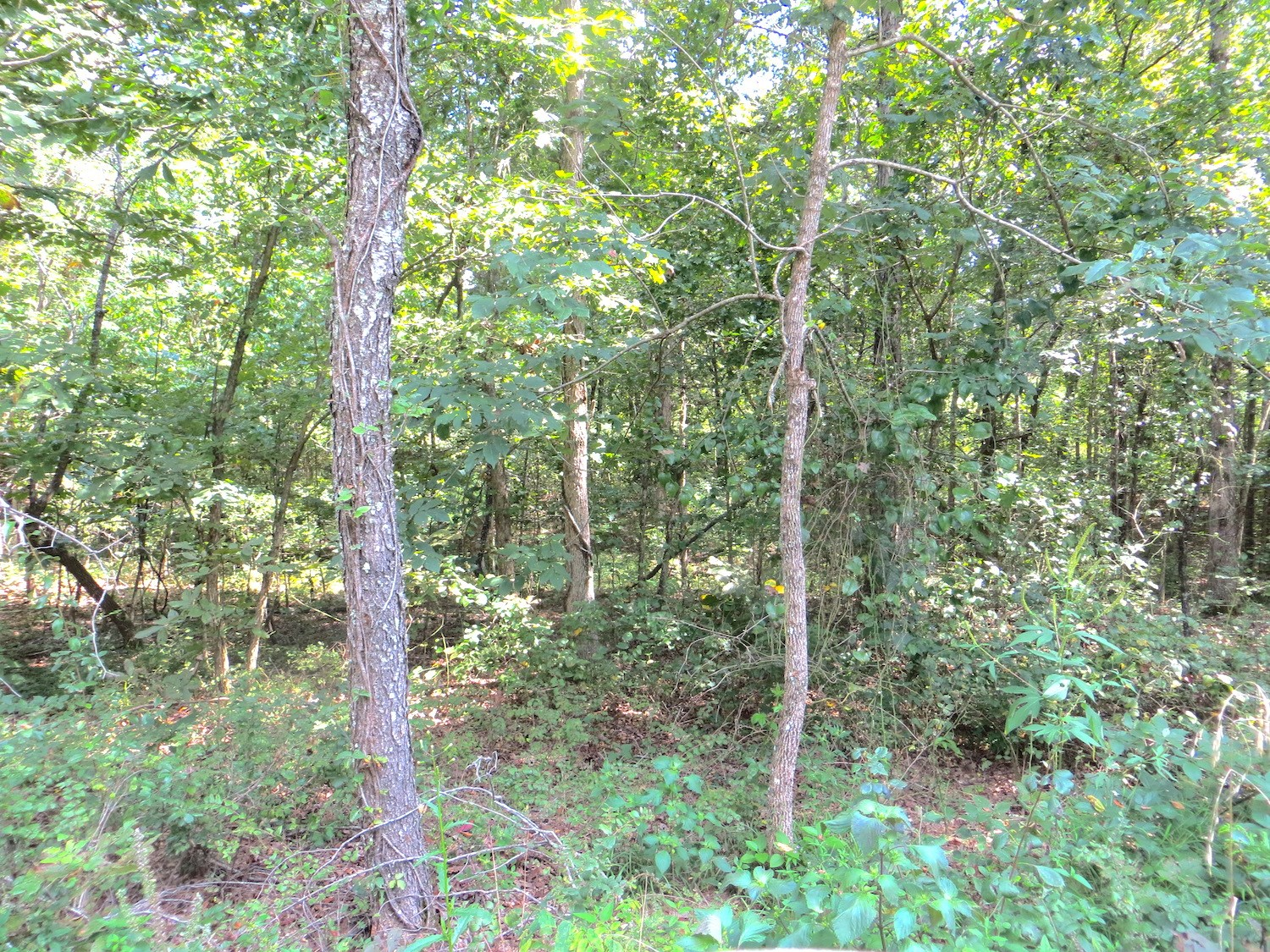 Land for Sale in Doniphan MO