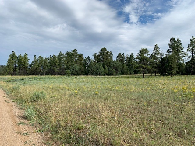 Land for sale surrounded by Carson Forrest Northern NM