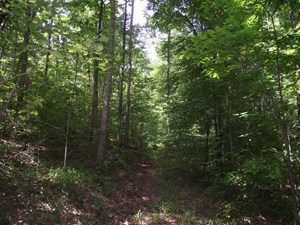 WOODED LAND FOR SALE