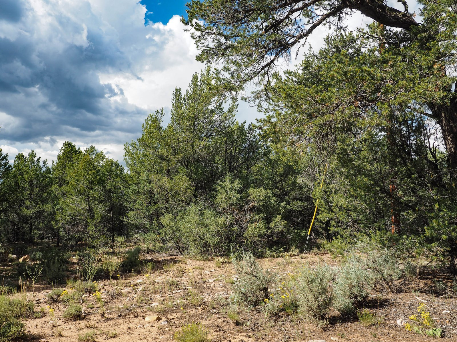 Lot for sale near El Vado State Park South of Chama Nm