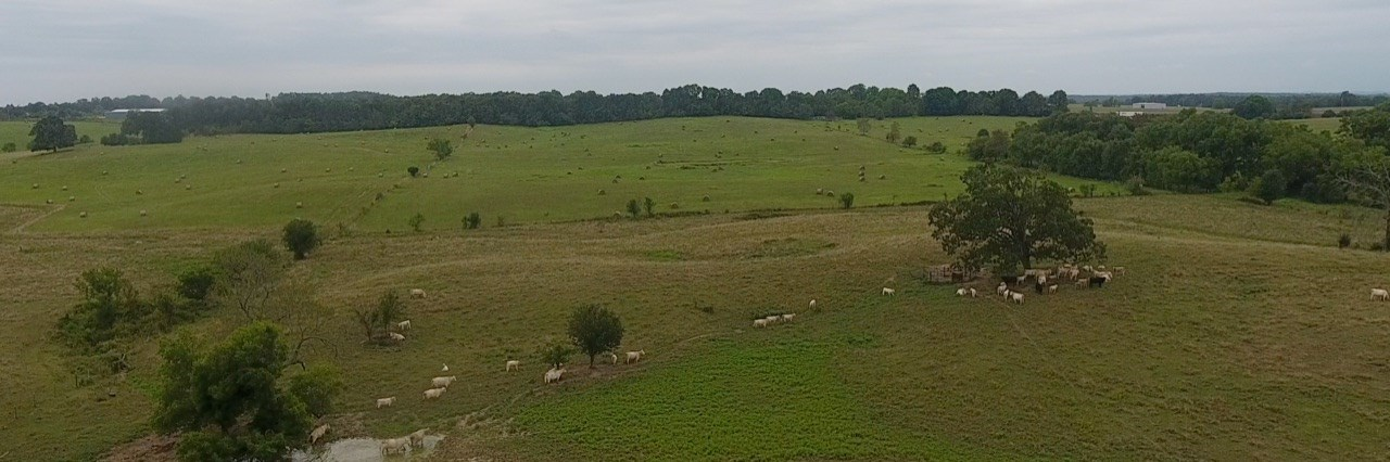 Working Cattle Farm for Sale in South Central Missouri