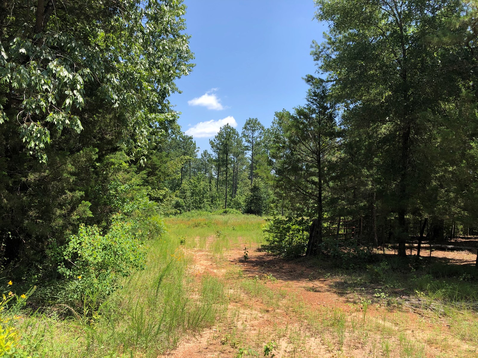 Timberland, Country Homesite, East Texas, Cass County