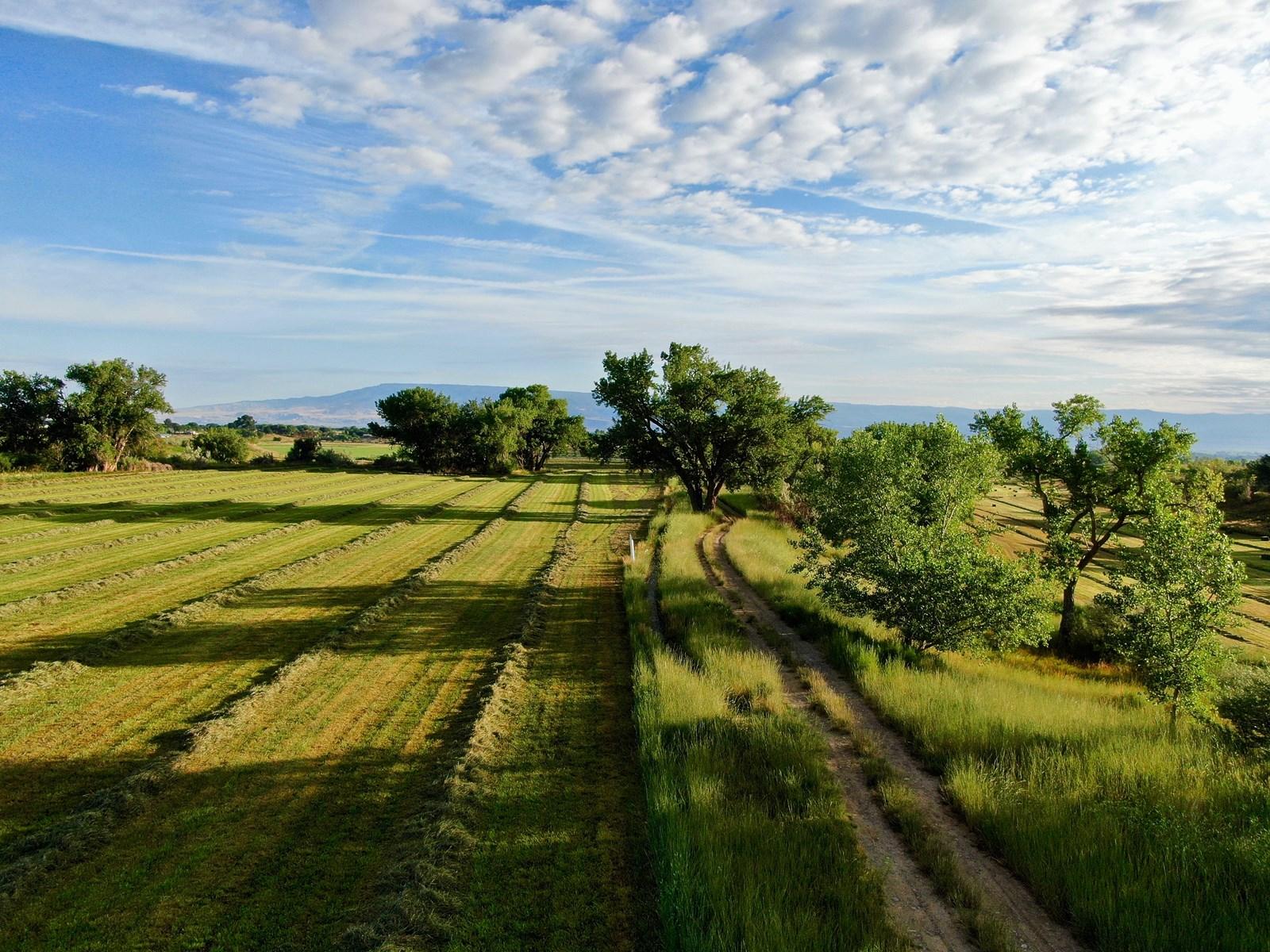 Colorado hay and horse property