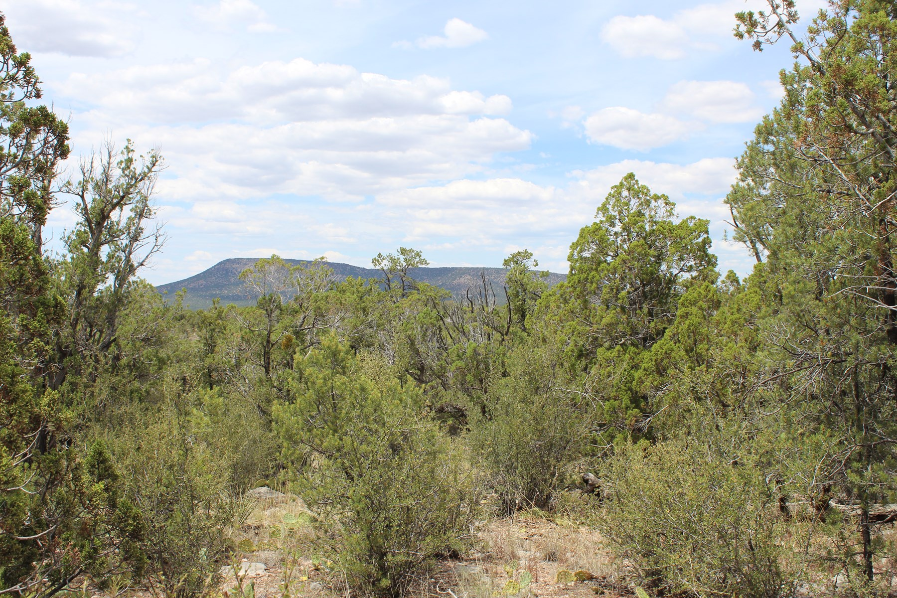40 Acres Wooded with Views for Sale Northern AZ
