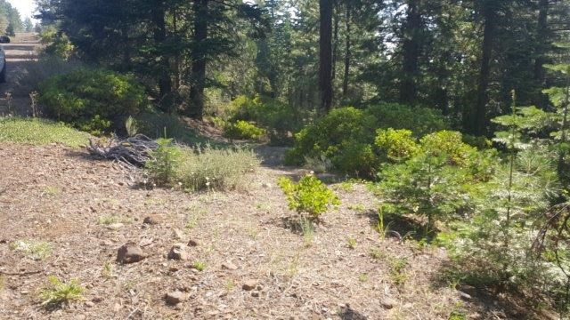 2.24 Acres For Sale Among Pine Trees up in Northeastern CA.