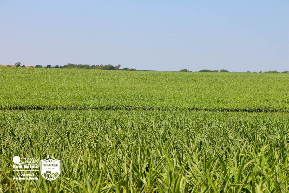 Lincoln County, Kansas Farmland & Pasture Land For Sale