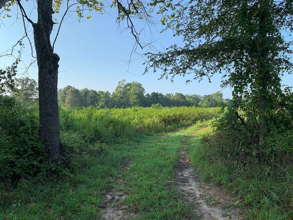 105 ACRES FOR SALE IN FRANKLIN, AR