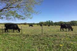 TX Farms for Sale