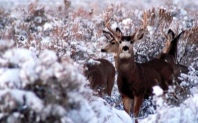 Winnemucca-Nevada-hunting-ai