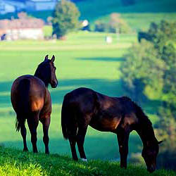 Texas Horse Properties for Sale
