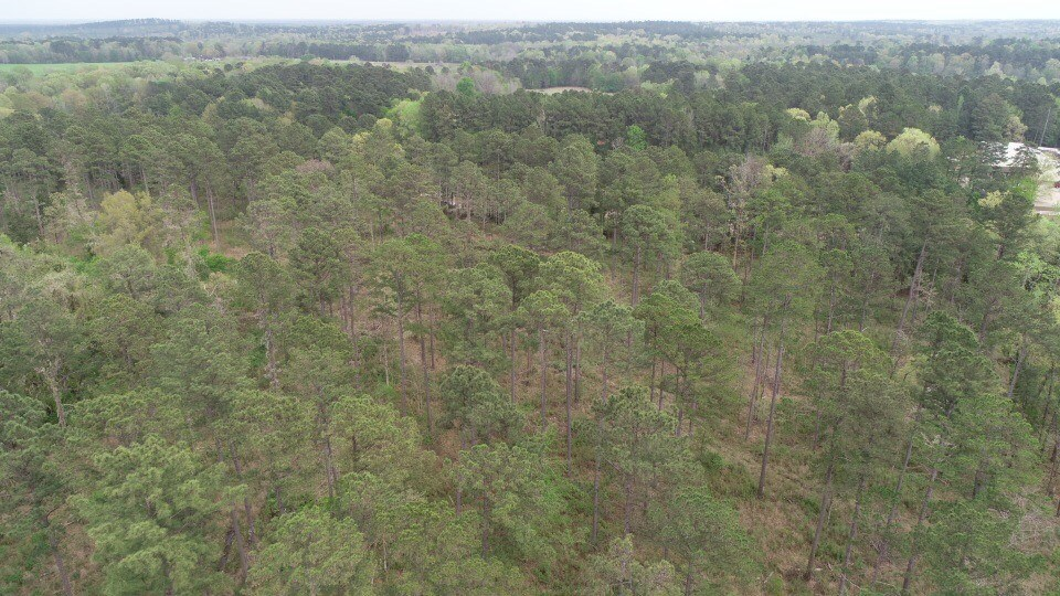 Home Site Lot and Timber Land Acres for sale near Camden
