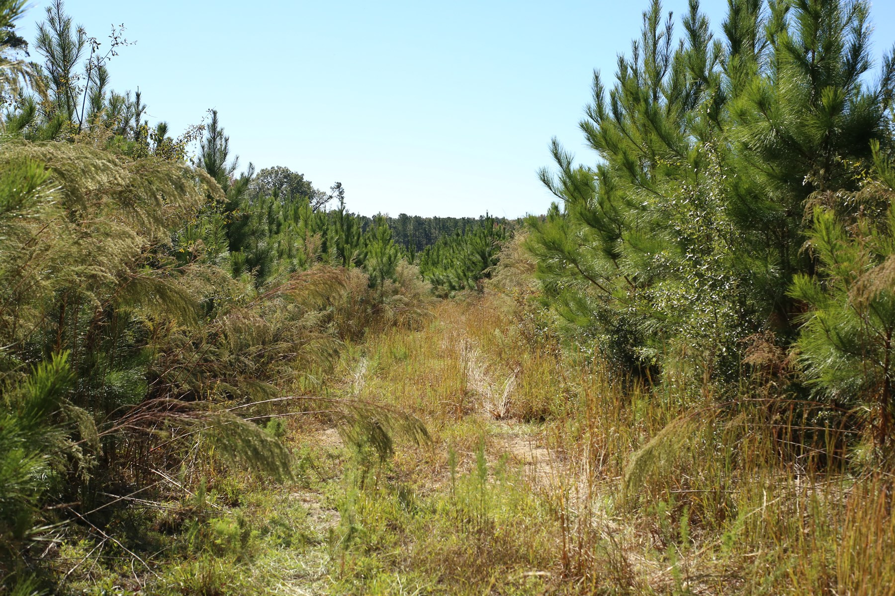24+/- Acres of Timberland in Bartow, Jefferson County, GA